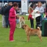 Cloghran All Breeds Champ Show, Irland, judge Ms Lillian Connolly