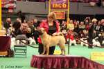 THE WESTMINSTER KENNEL CLUB; MADISON SQUARE GARDEN CENTER; NYC