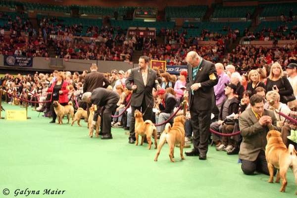 The Westminster Kennel Club Madison Square Garden Center Nyc