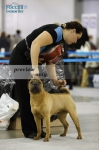 IDS RUSSIA-2 | RING Shar-Pei