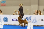 фотографии шарпеев с World Dog Show 2016, ринг щенки кобели