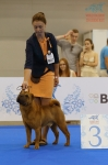 фотографии шарпеев с World Dog Show 2016, класс чемпионов кобели