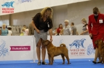 фотографии шарпеев с World Dog Show 2016, класс ветеранов кобели