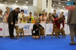фотографии шарпеев с World Dog Show 2016, кобели сравнение на CACIB