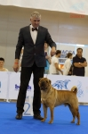 фотографии шарпеев с World Dog Show 2016, кобели сравнение на R.CACIB