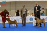 World Dog Show 2016, ринг шарпеев, кобели, World Winner`2016 (CACIB) и Vice. WorldWinner (R.CACIB)